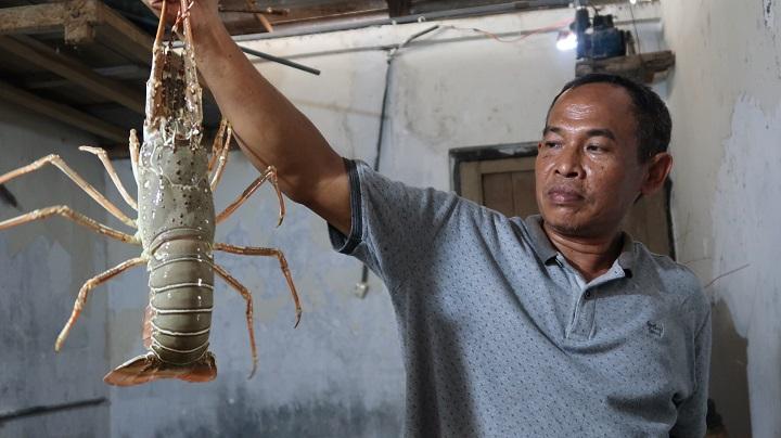 Kisah Pengepul Lobster Rembang, Buntung Di Era Edhy Prabowo