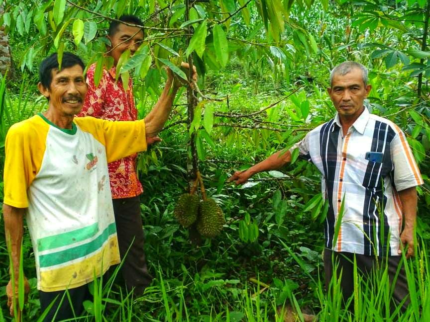 """Pohon Durian """"Cebol"""" Tumbuh Subur di Rembang"""
